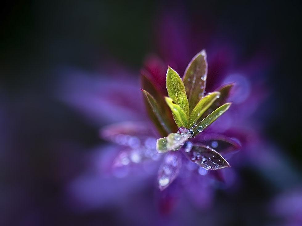macro photography joni niemela 8