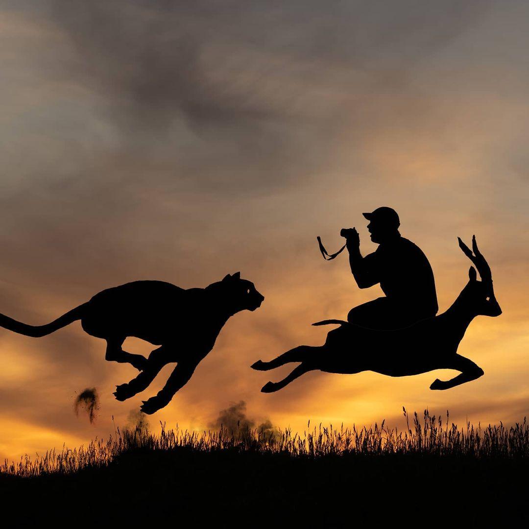cardboard silhouette photography cutout cheetah by john marshall