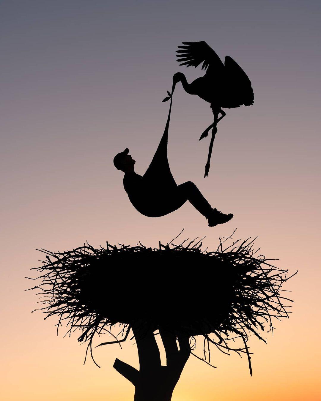 silhouette photography cardboard cutout bird nest by john marshall