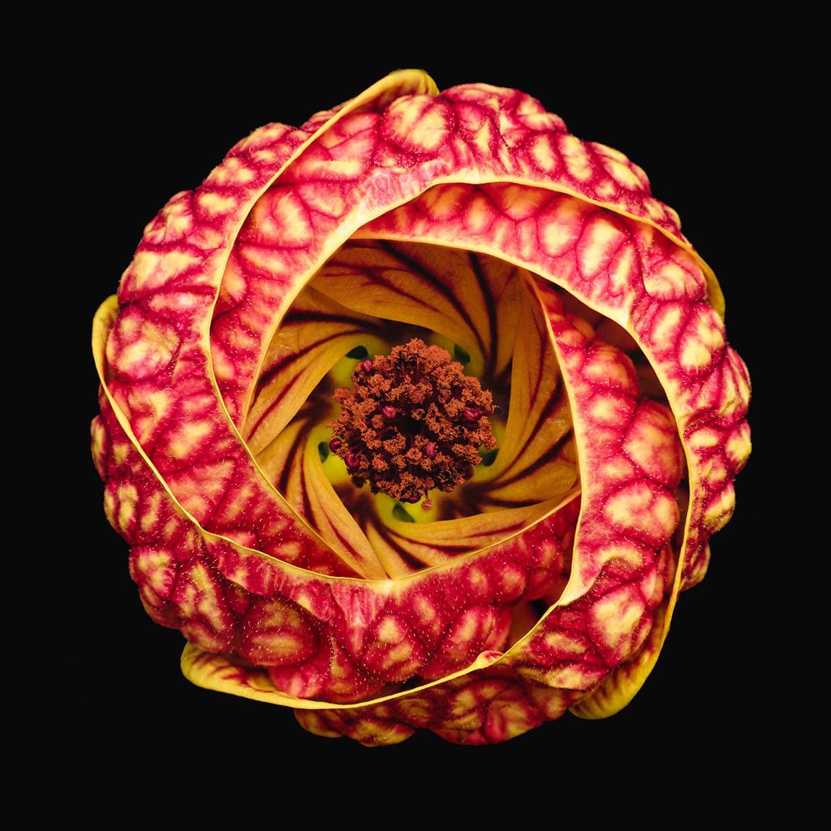 macro photography vortex blossom by bruno militelli