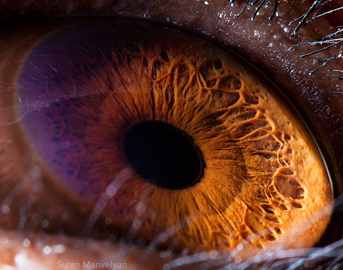 4 macro photography chimpanze eye by suren manvelyan