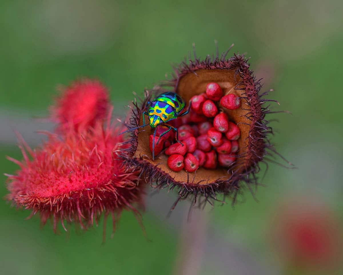macro photography jewels by wei fu