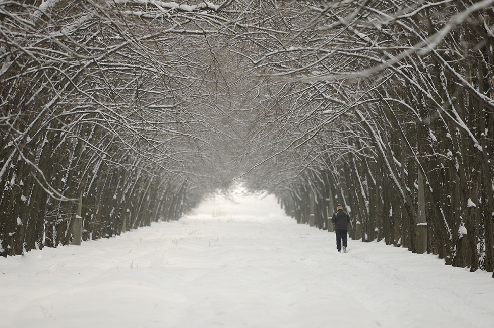 photography nature snow by denis bodrov