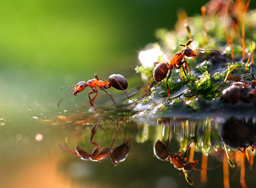 1 ant macro photography by vadim trunov