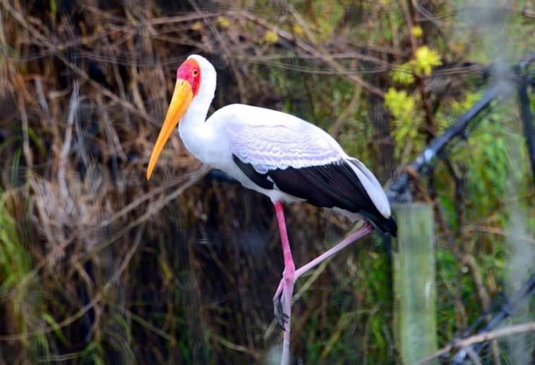 captive bird disney wildlife photography by cathy scola