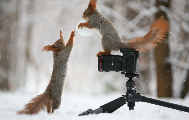 beautiful squirrel photography by vadim trunov