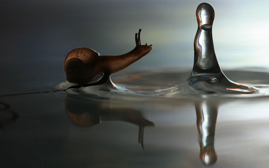 snail water drop macro photography by vadim trunov