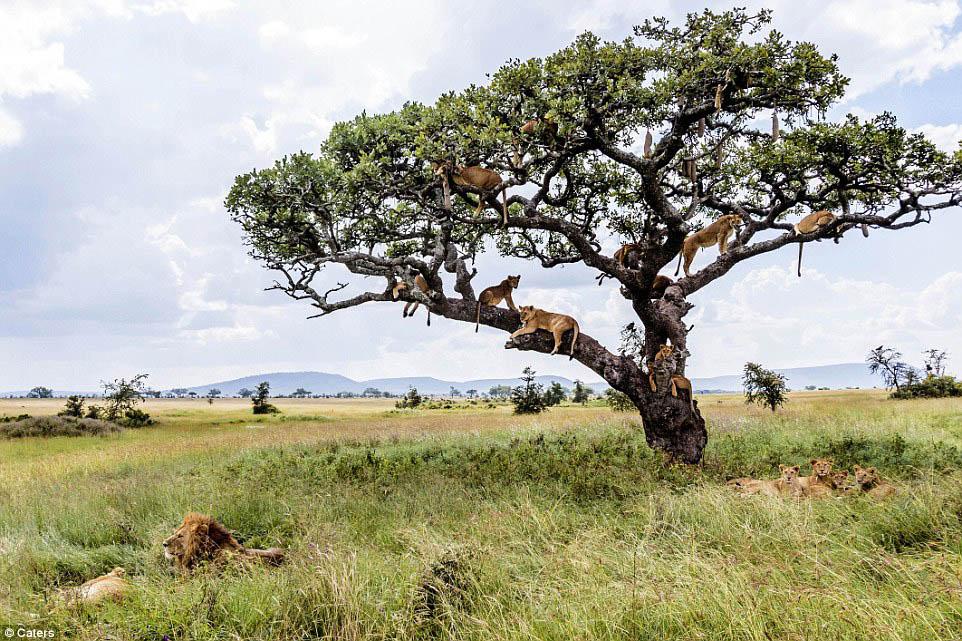 wildlife photography by bobby jo clow