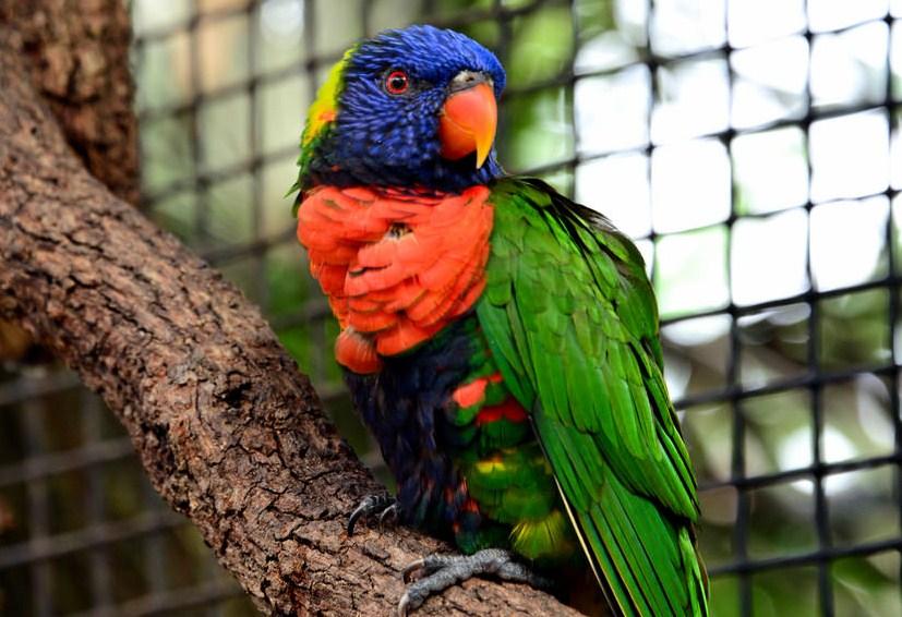 bird macaw wildlife photography by cathy scola