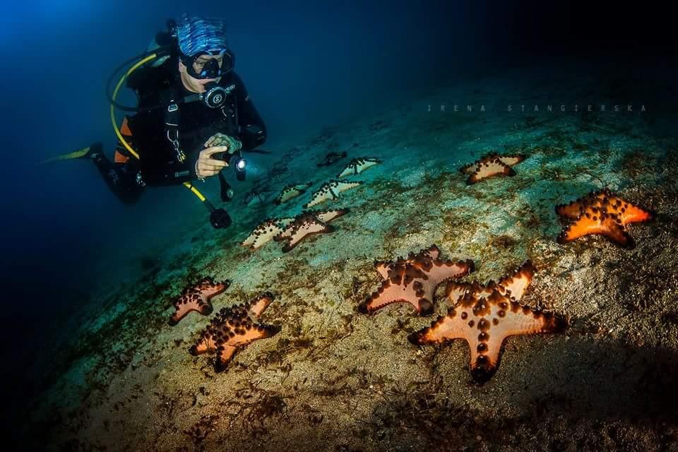 12 underwater star fish photography by irena stangierska