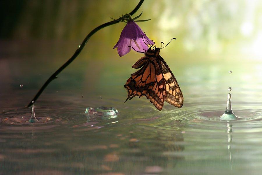 butterfly macro photography by vadim trunov