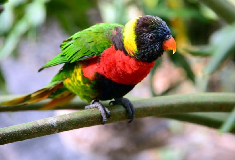 lorikeet wildlife photography by cathy scola