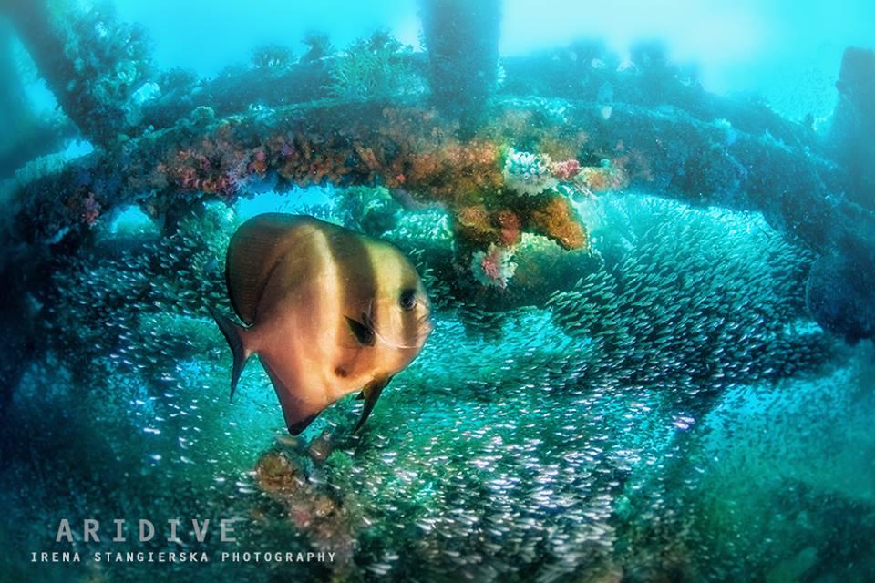 13 underwater fish photography by irena stangierska