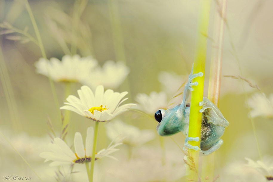 macro frog photography by wil mijer