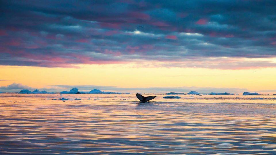 travel photography arctic paradise by dave brosha