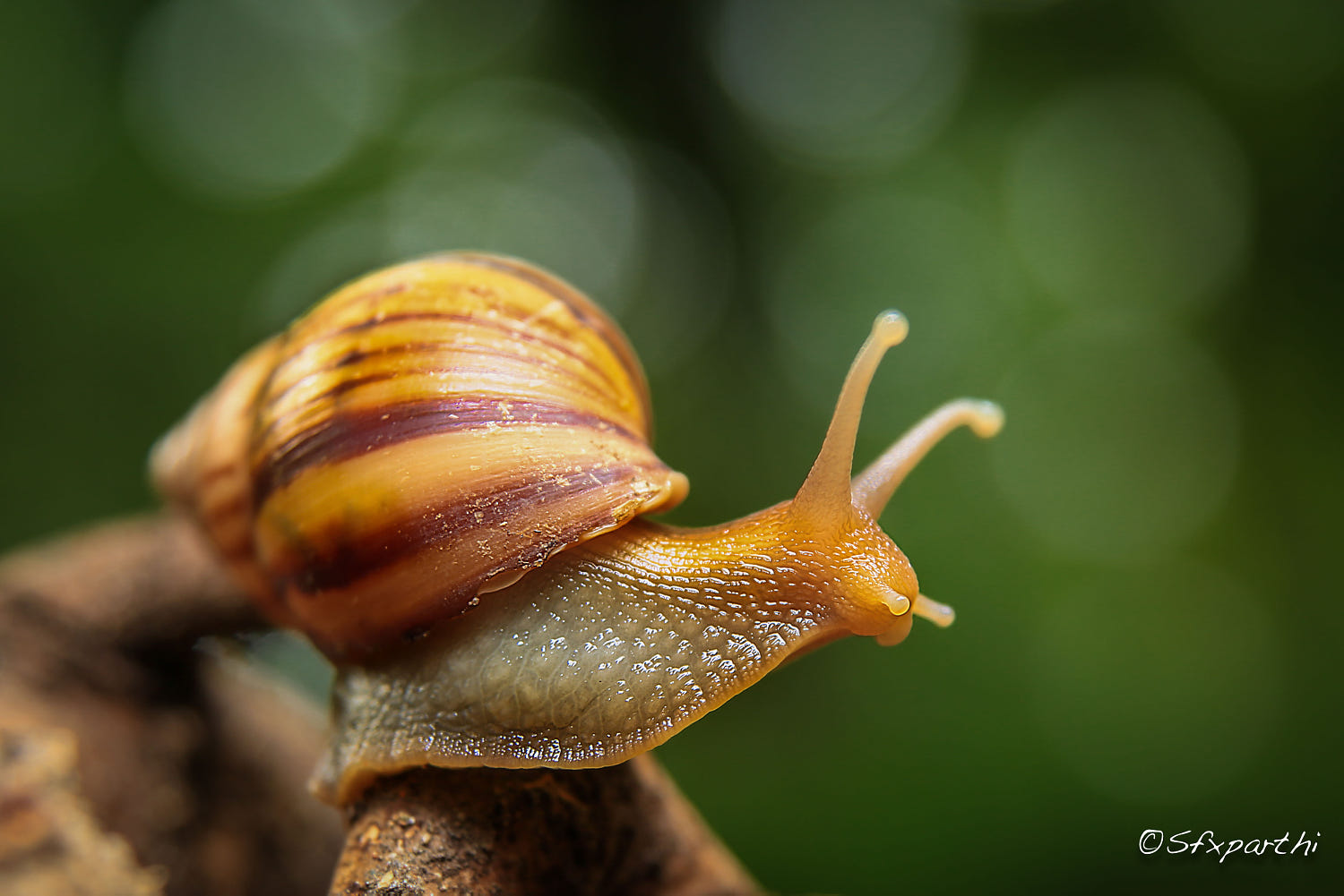 macro photography snail by sfx parthi