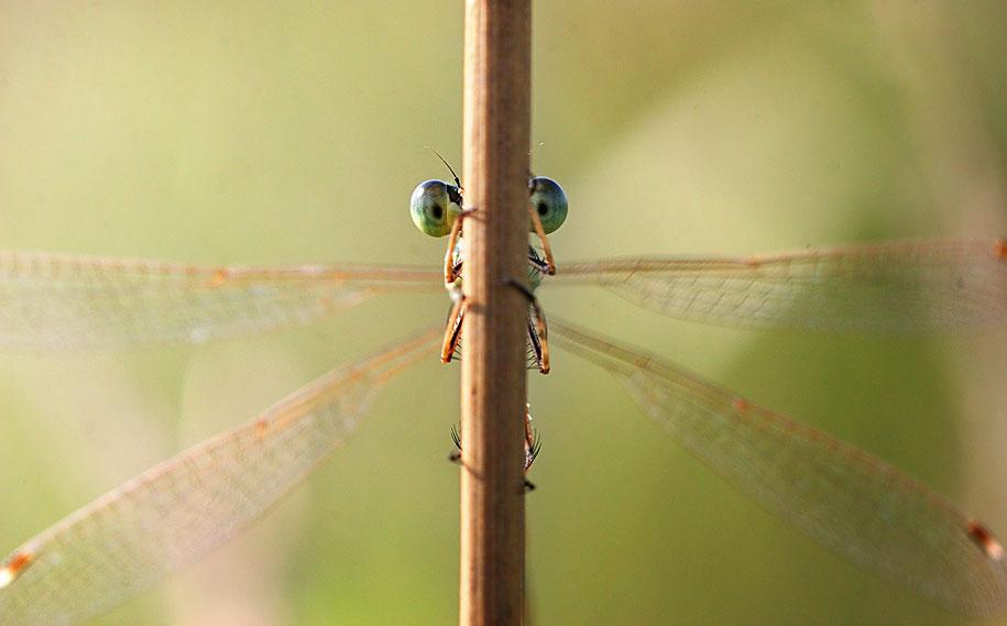 housefly macro photography by vadim trunov