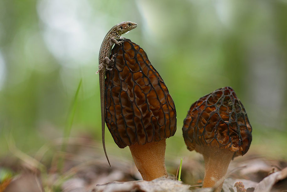 bug snail macro photography by vadim trunov