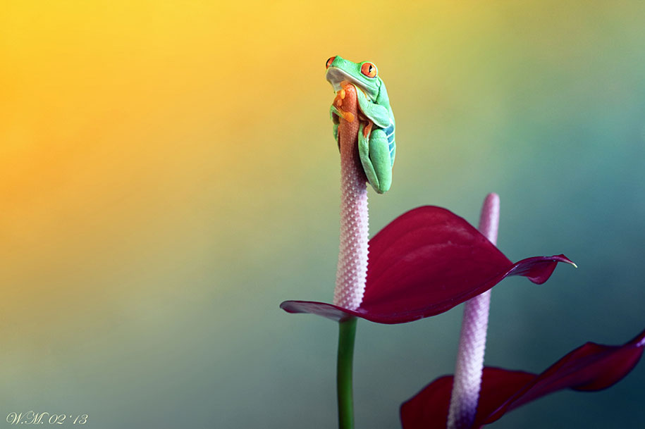 frog photography by wil mijer