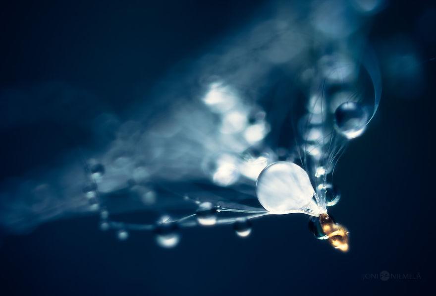 rain drop macro photography by joni niemela