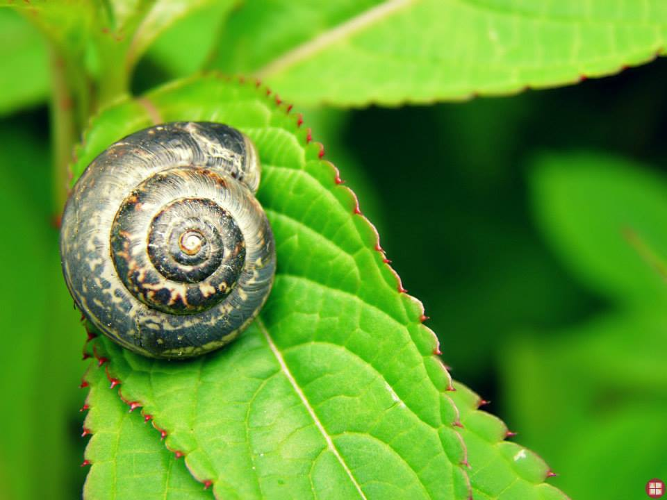 shell macro photography by alexandra baker