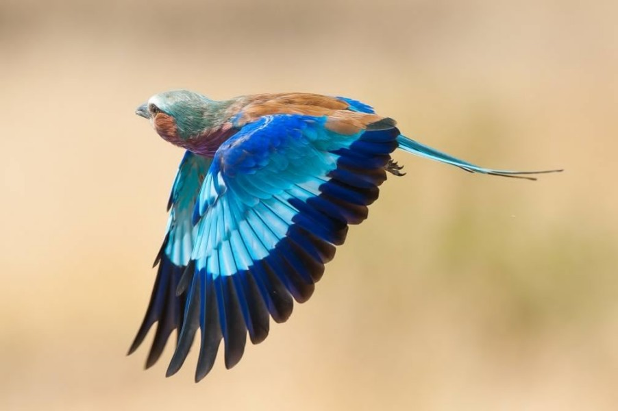 kingfisher wildlife photography by paul joynson hicks