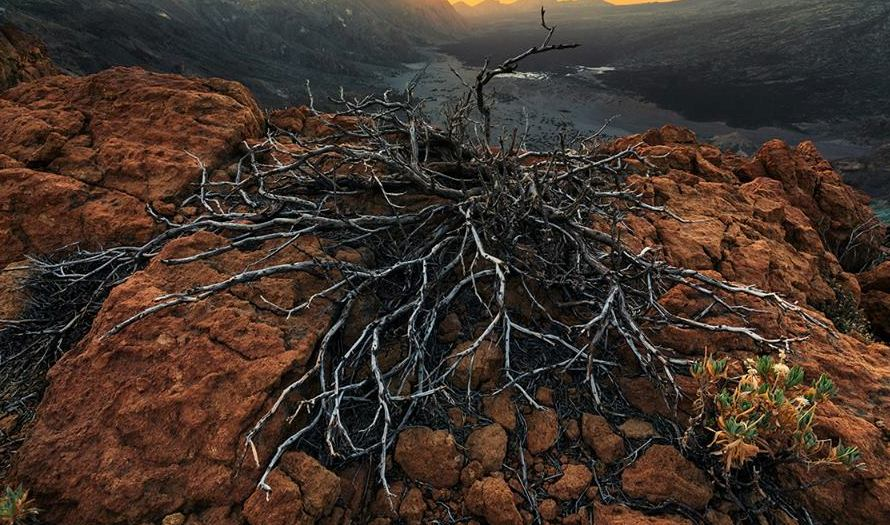 mountain roots photography by lukas furlan
