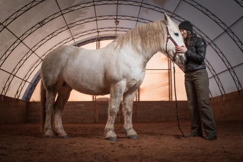 travel photography horse by dave brosha