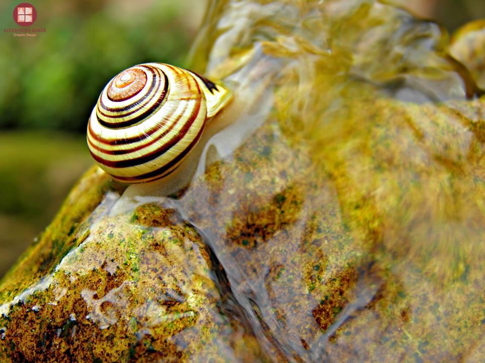 snail shell macro photography by alexandra baker