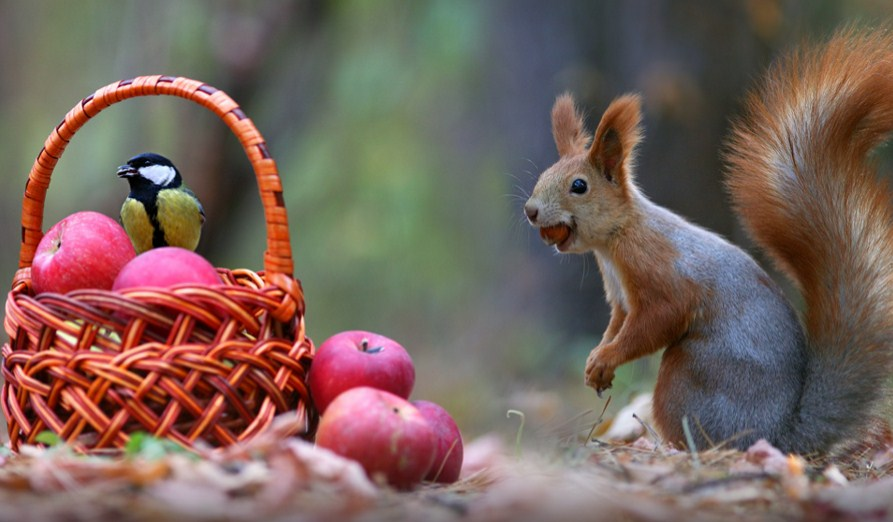beautiful squirrel bird photography by vadim trunov
