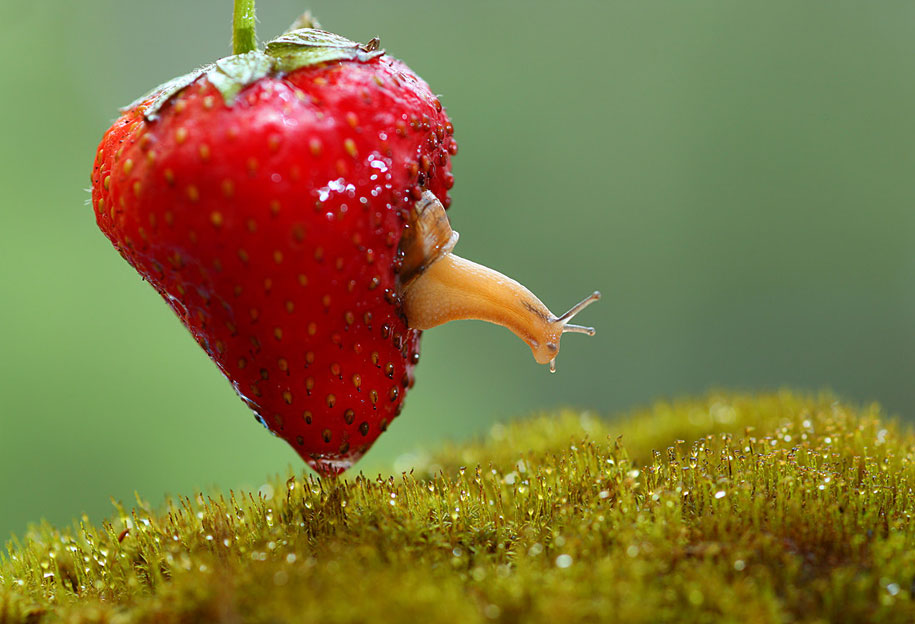 snail macro photography by vadim trunov