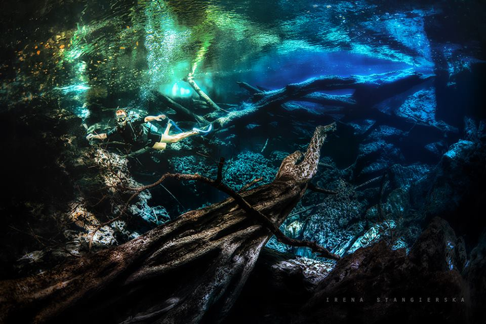 underwater forest photography by irena stangierska