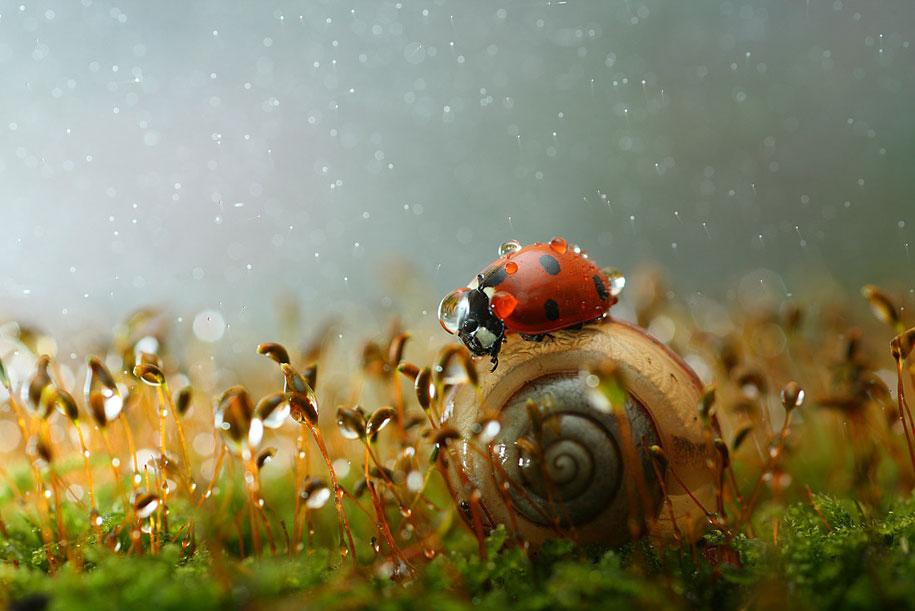 ladybug macro photography by vadim trunov