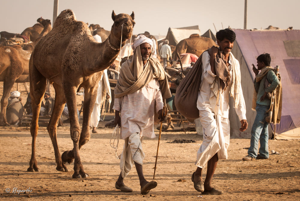 lifestyle photography camel walk by sfx parthi