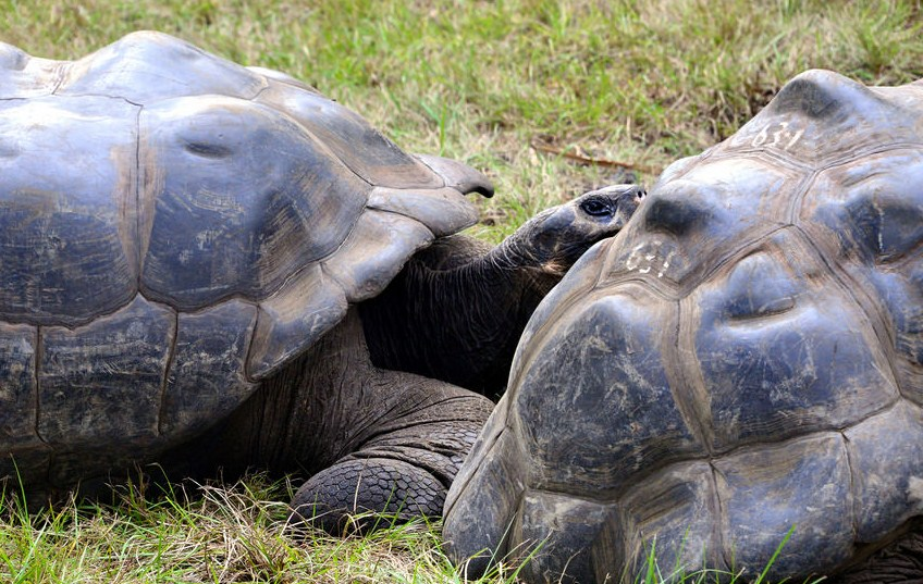 giant tortoise wildlife photography by cathy scola