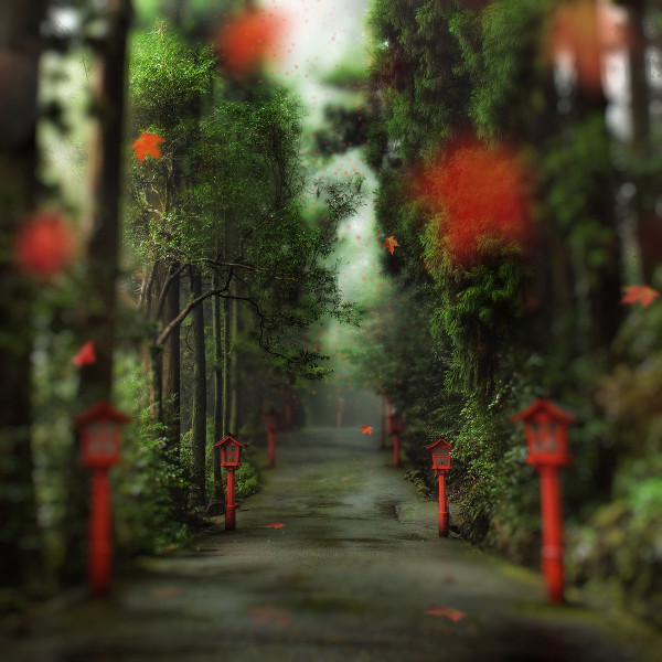gentle path photograph by trey ratcliff