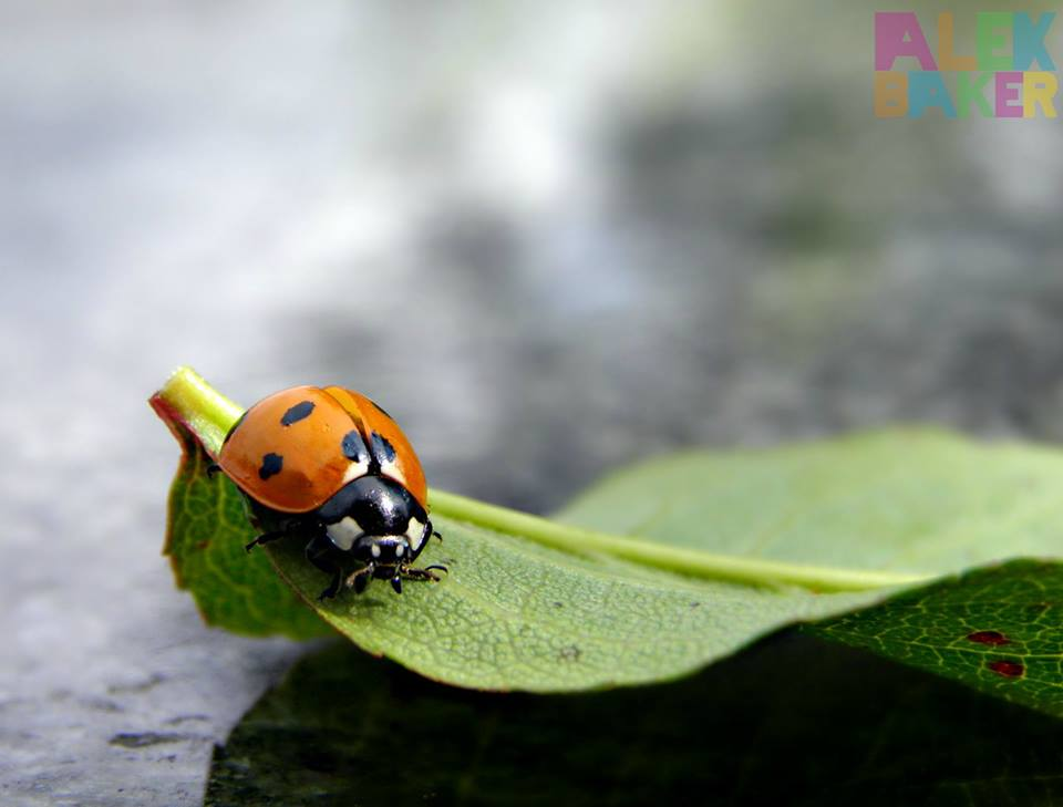 beetle macro photography by alexandra baker