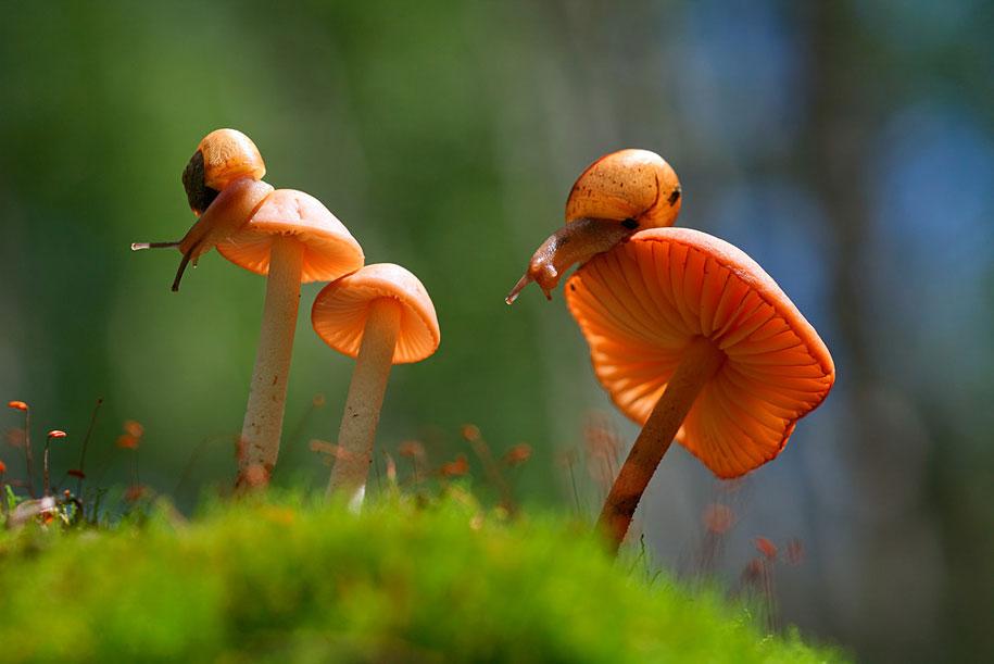 snail mushroom macro photography by vadim trunov