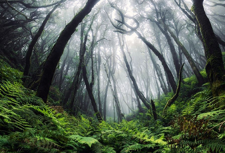 forest tree landscape photography by lukas furlan