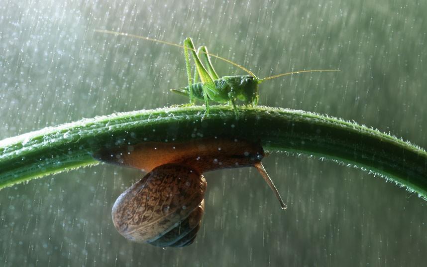 snail grasshopper macro photography by vadim trunov