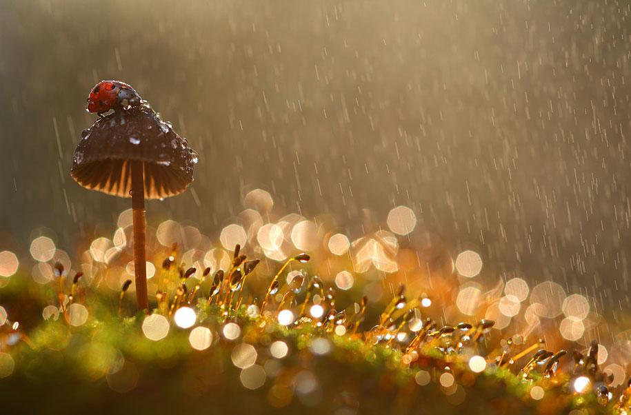beetle macro photography by vadim trunov