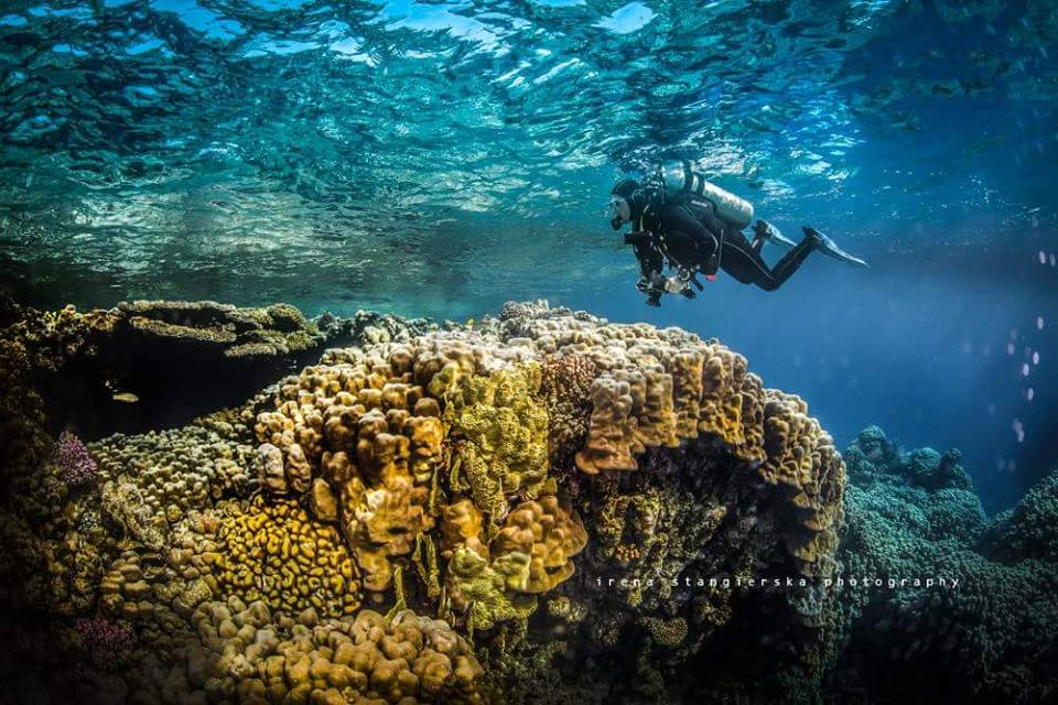 coral reef underwater photography by irena stangierska