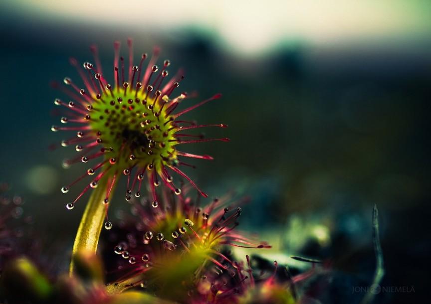 plant macro photography by joni niemela