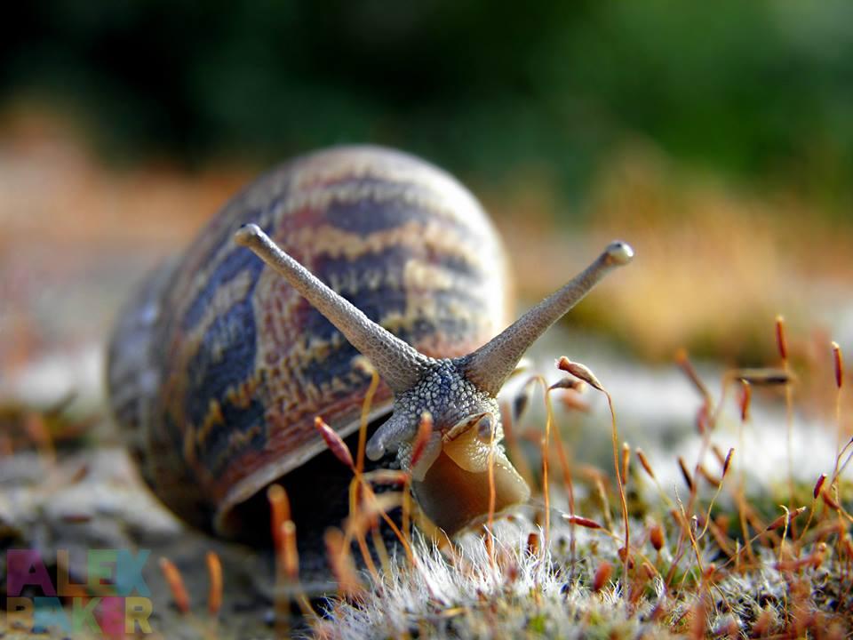 snail macro photography by alexandra baker