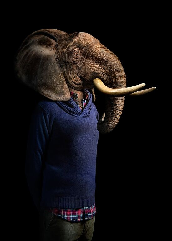 elephant wildlife portraits by miguel vallinas