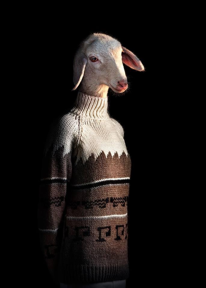 goat wildlife portraits by miguel vallinas