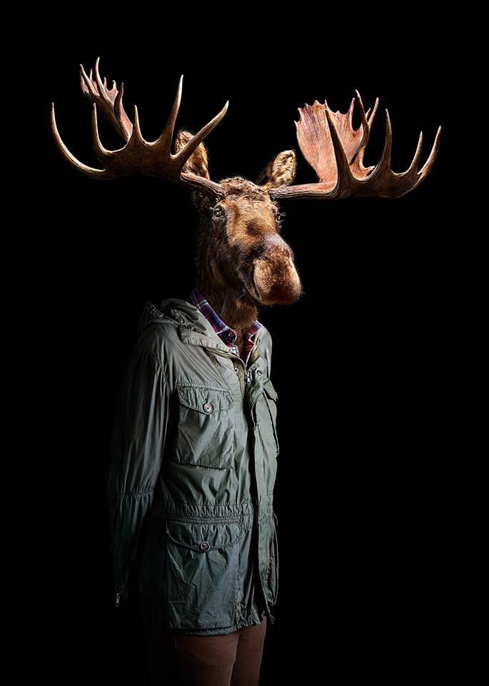 deer wildlife portraits by miguel vallinas