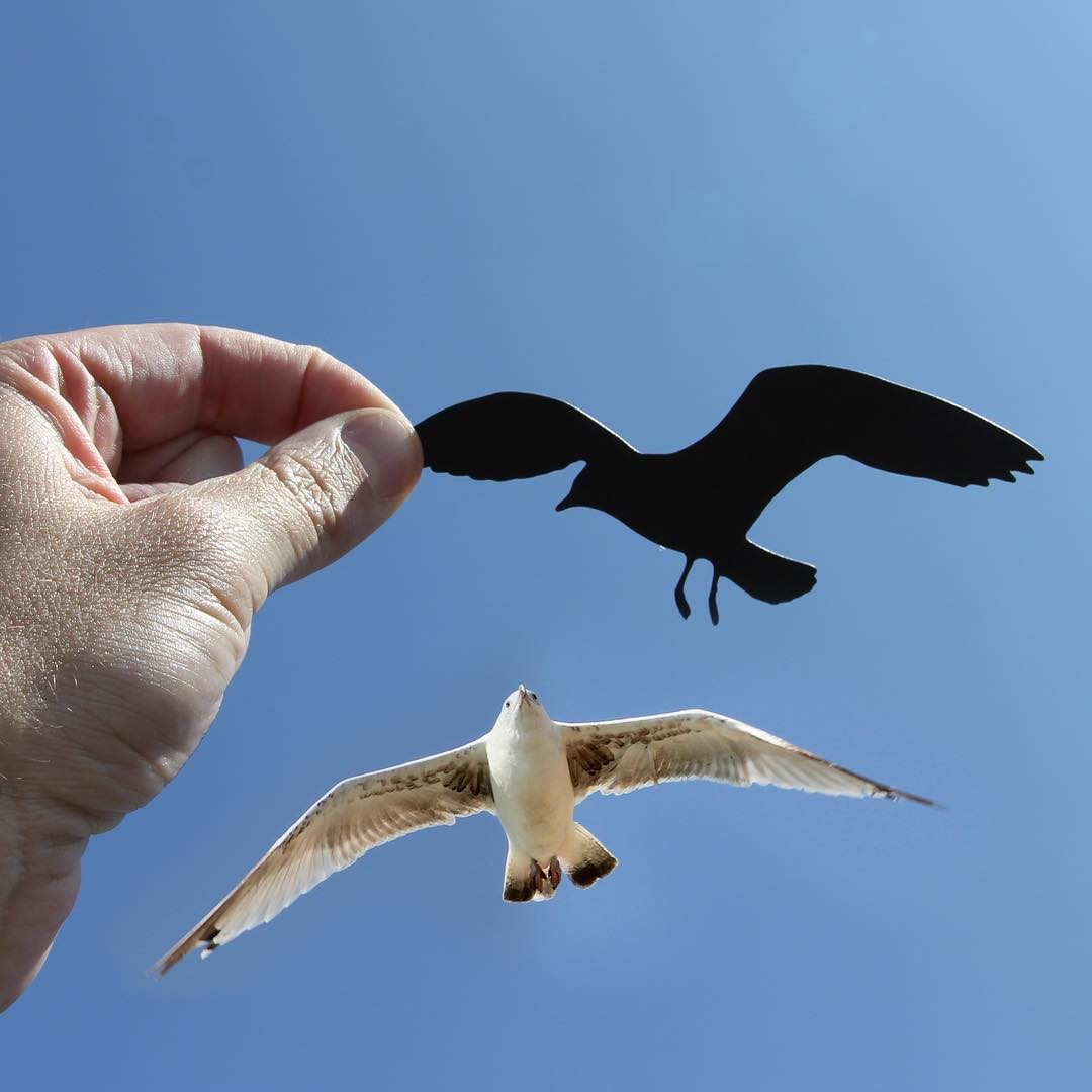 eagle photography ideas by rich mccor