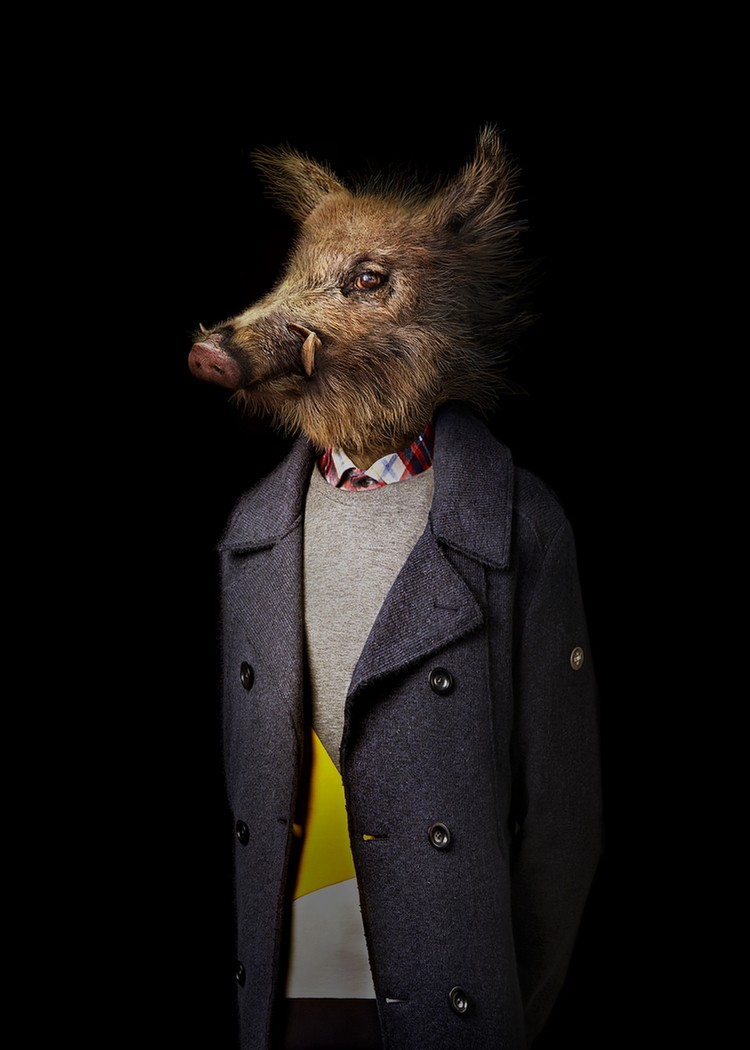 5 pig wildlife portraits by miguel vallinas