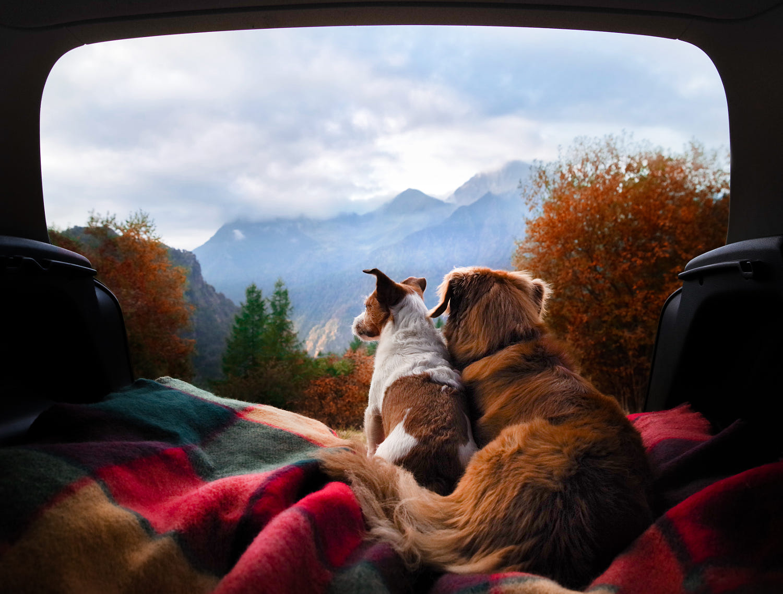 winning animals love photography dog by anna averianova